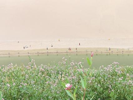 月牙泉南岸的小紅花羅布麻,是傳說中的七星草,也是月牙泉邊獨特的保健中草藥,據說有延緩衰老的功效。
