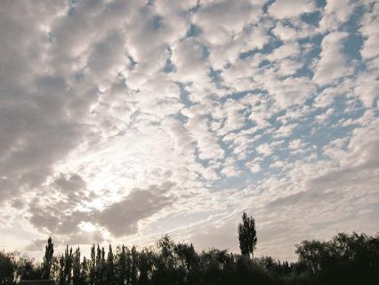 在西北抬頭,總可以輕易看見綿羊般的雲。